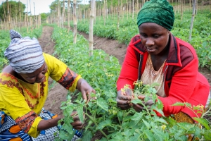 "Food insecurity in Africa is ""very strongly related to climate change"""