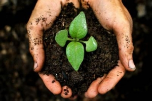 World Soil Day - Addressing Soil Fertility to Ensure Food Security